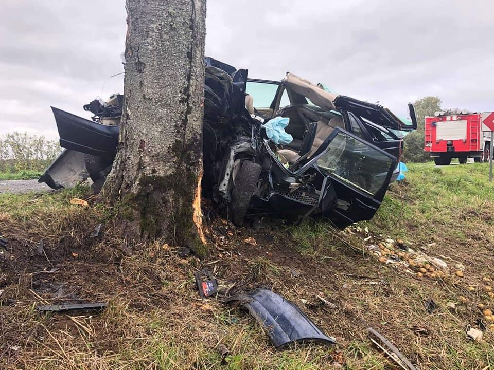 Auto ietriecās kokā
