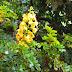 Descubra algumas plantas nativas brasileiras que talvez você não conhecia