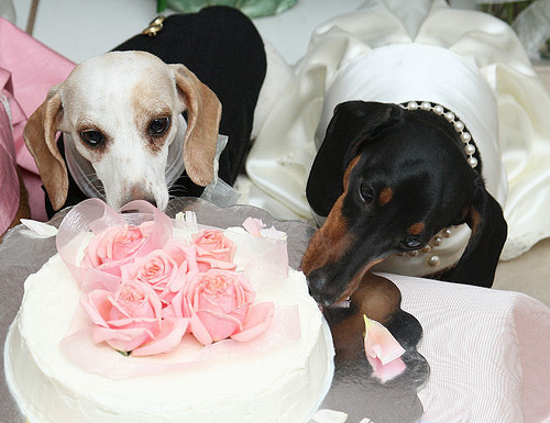 Blogger Of The Bride Dog Weddings