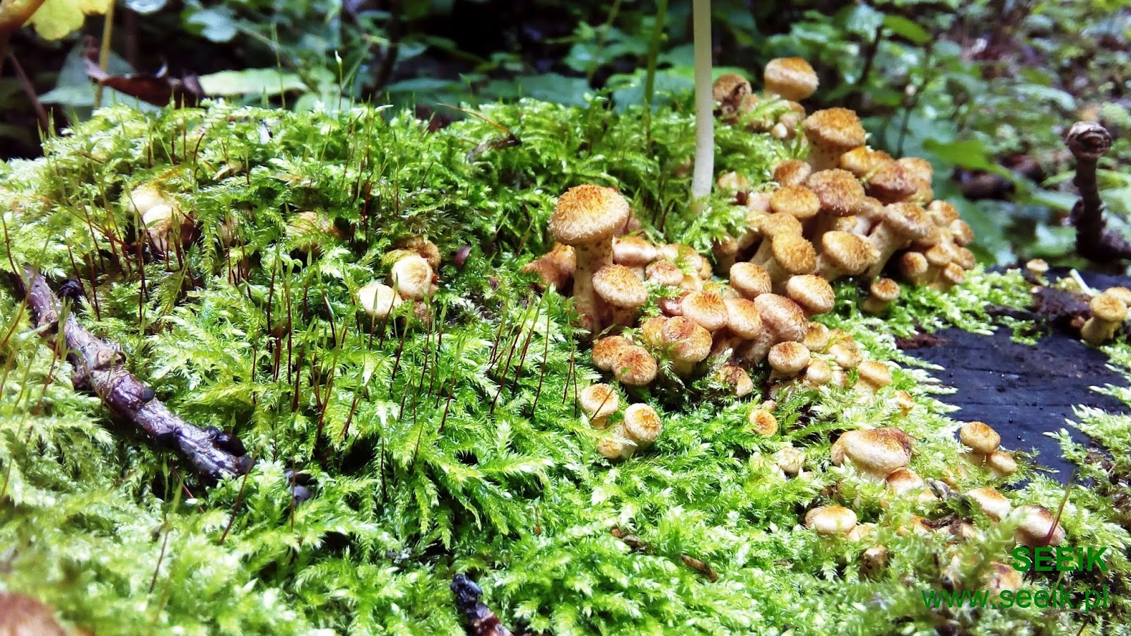 Mushrooms from Masuria woods