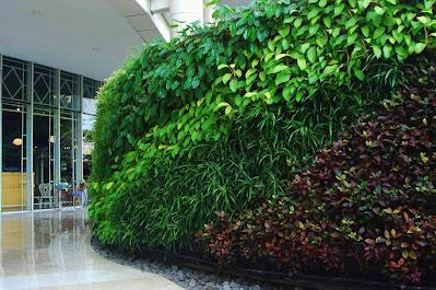 Tukang taman Suarabaya Gambar Vertical Garden (Living Wall, Green Wall/Taman Vega)