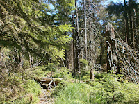 Vom Hundseck an der Schwarzwaldhochstraße auf den Hohen Ochsenkopf im Nationalpark Schwarzwald