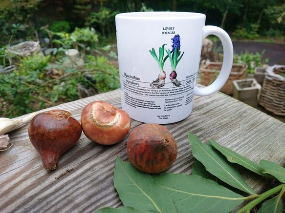 Let's have a teatime in your garden after planted Hyacinth bulbs.