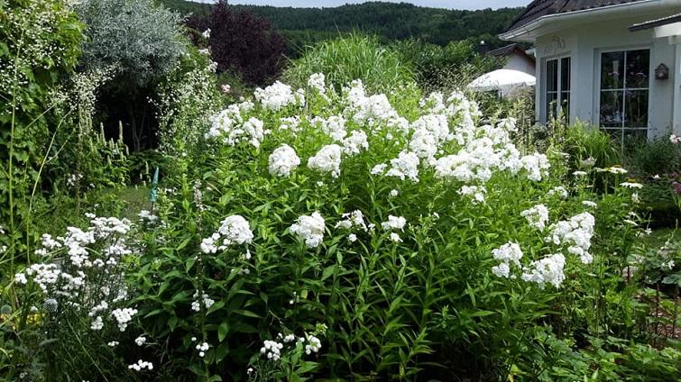 Einblick in private Gärten
