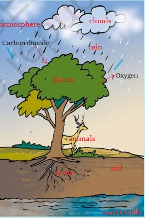 NCERT Solutions for Class 7th Ch 17 Forests Our Lifeline