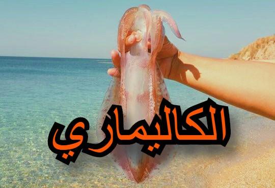 الحبار الكاليماري حبار البحر صيد الحبار صيد الكاليماري
