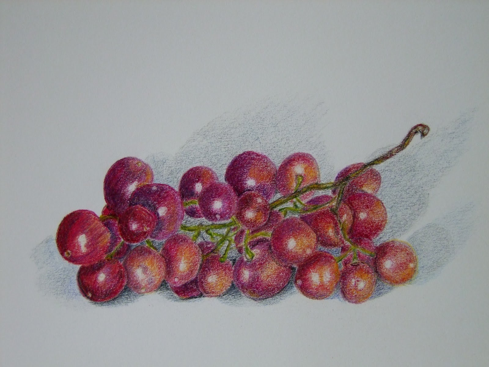My artbox red grapes colored pencil study on 9x12 canson drawing