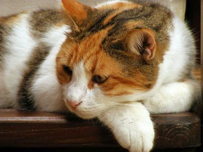 normale nierenwerte bei katzen