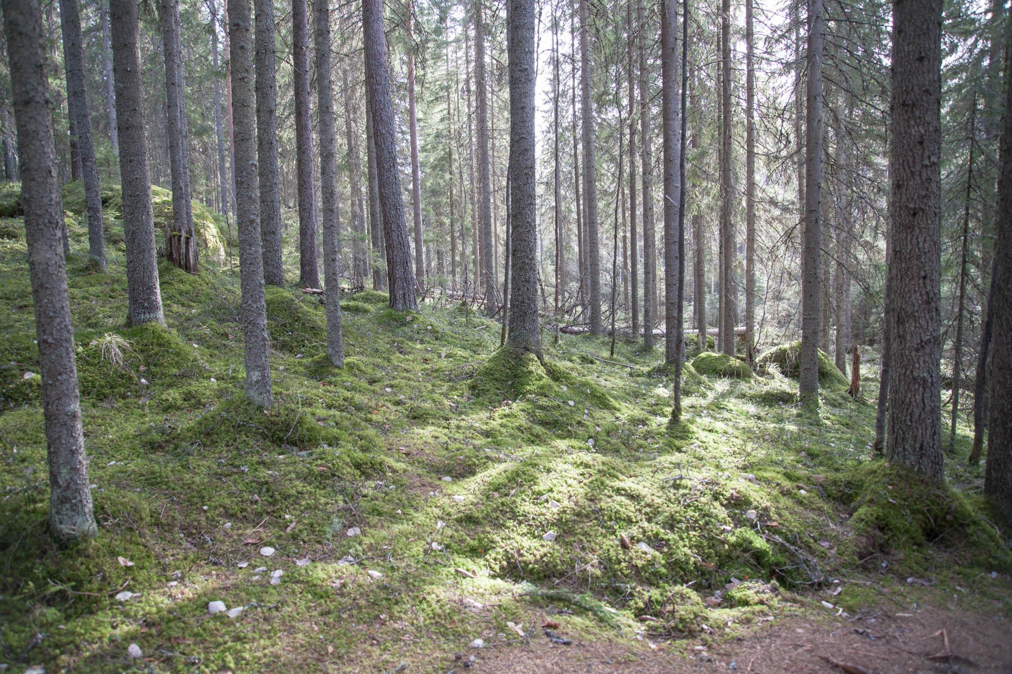 metsä kansallispuisto