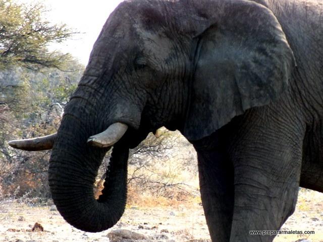 reserva nacional de pilanesberg sudáfrica