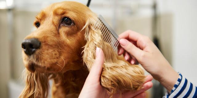 Πόρτο Χέλι Αργολίδας: Ζητείται έμπειρος dog groomer