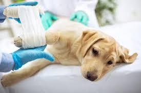 tratamento de fraturas em cães