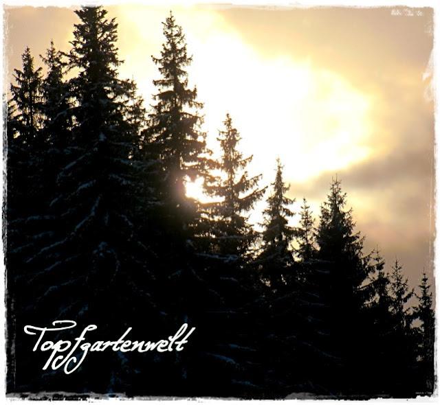 Gartenblog Topfgartenwelt Schlittenfahren: Sonnenuntergang in Altenmarkt