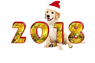 feng shui energy and tips for the year of the dog 2018
