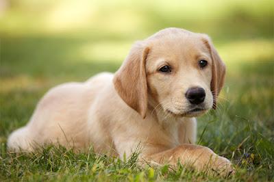 Amazing Facts about Dogs in Hindi – कुत्ते के बारे में रोचक तथ्य