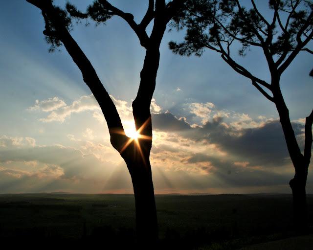 sole, albero, tronco, tramonto, cielo, nuvole, prati