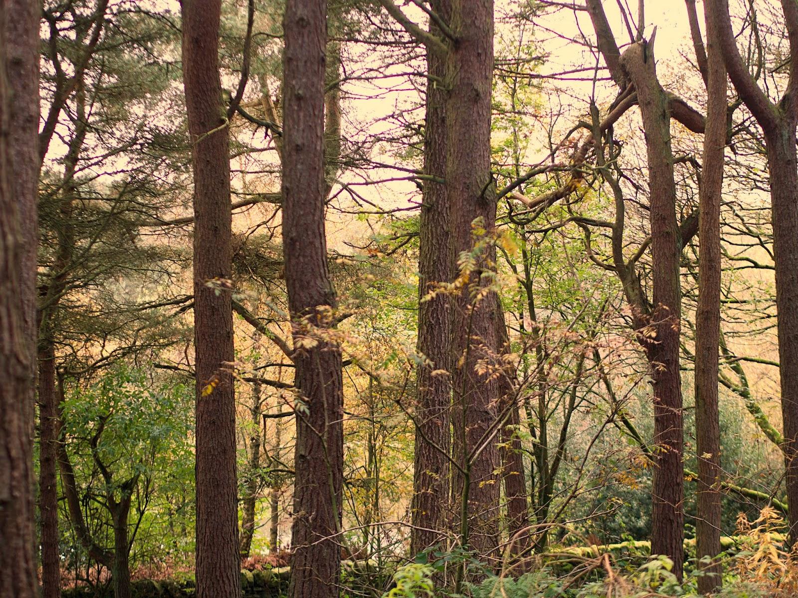 woods at ogden