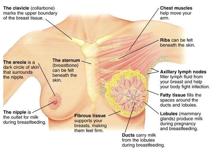 Pea sized hard lump in breast