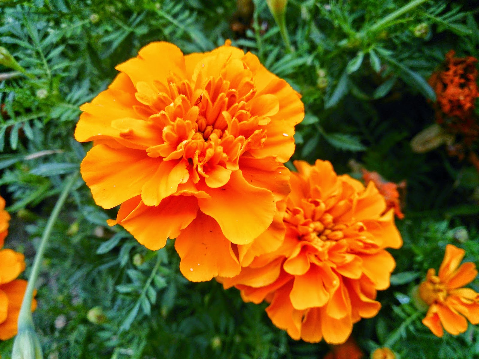 Orange and yellow flowers names