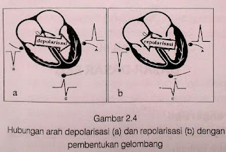 Sistem Konduksi serta Proses depolarisasi dan repolarisasi Jantung