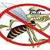 Donos de terrenos sujos podem ser notificados devido à dengue em Feijó