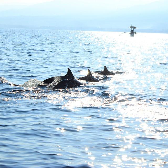 Melihat Lumba Lumba di Pantai Lovina