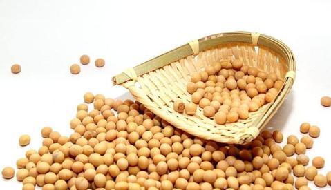 सोयाबीन की खेती | Soyabean Ki Fasal