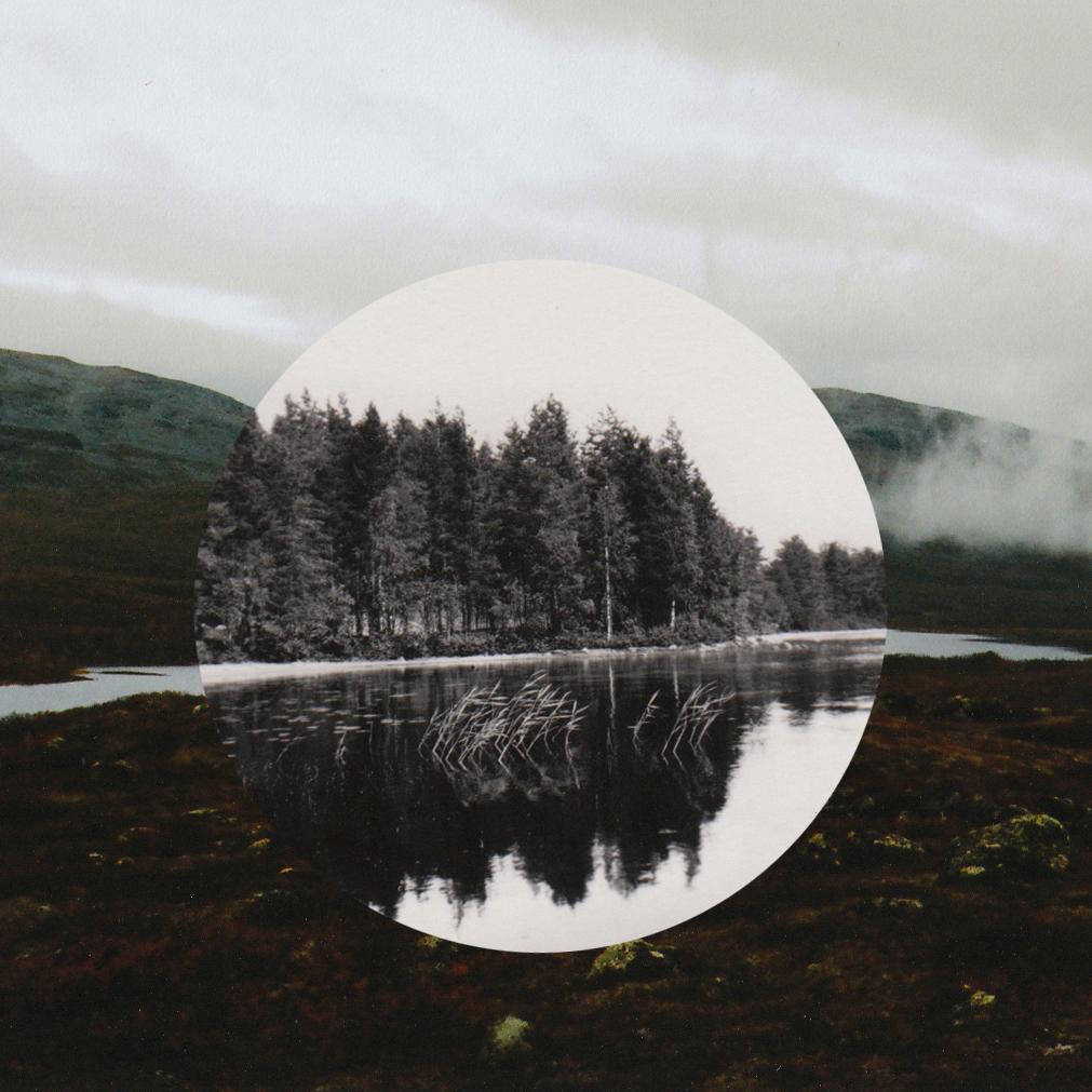 Passer Domesticus: photomontage.