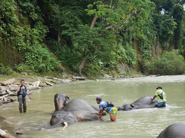 saat gajah dimandikan