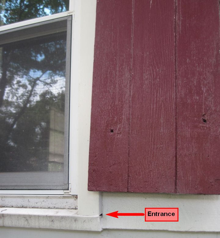 Matt S Blog How To Get Rid Of Yellow Jackets In Siding Or