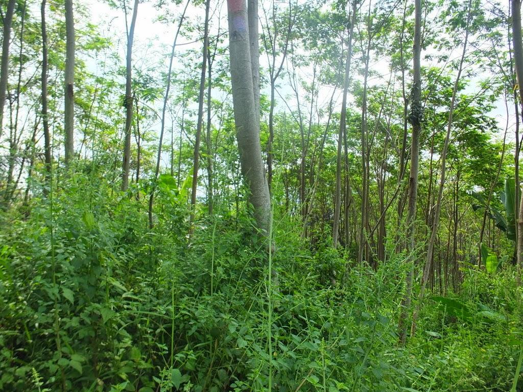 DSCF1834+(FILEminimizer) Jual Tanah Kebun Albasiah 6 HA Di Kec Pacet Jual tanah di cipanas