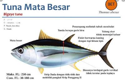 Distribusi Ikan Tuna Mata Besar (Thunnus Obesus)