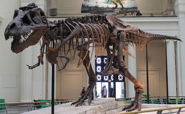 "T. rex had huge growth spurts, but other dinos grew ""slow and steady"""
