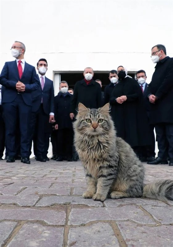 Erdogan creates an account on Telegram and publishes a picture of a cat