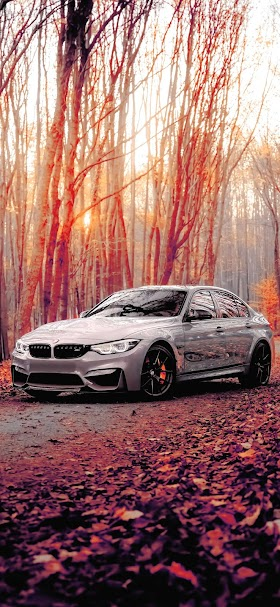 Silver BMW M3 coupe parked on forest wallpaper