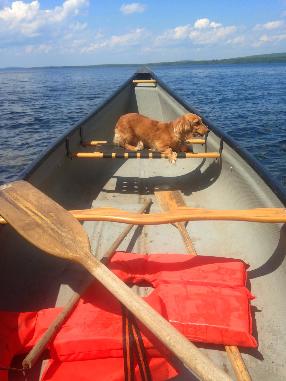 Maine Lake Doxie
