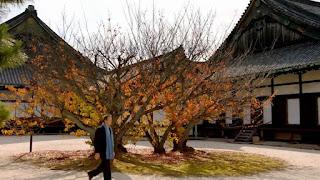 Nijo Castle trees