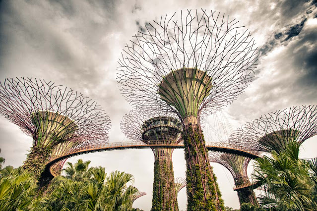 Supertree Grove ai Gardens by the bay-Singapore