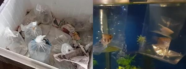 Add Angelfish & Tank Mates to Aquarium