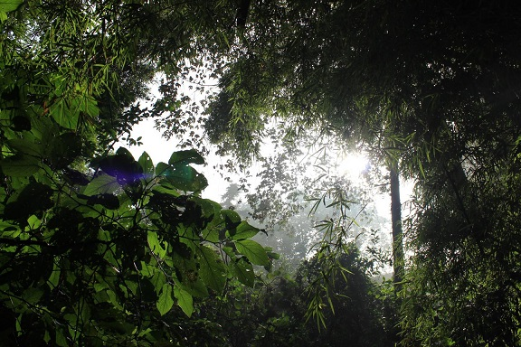 Les forêts tropicales ont été altérées par l'homme depuis au moins 45,000 ans