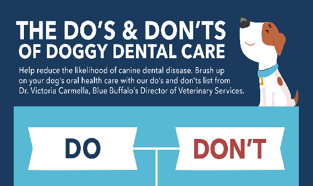 Dental Tips for Dogs #infographic