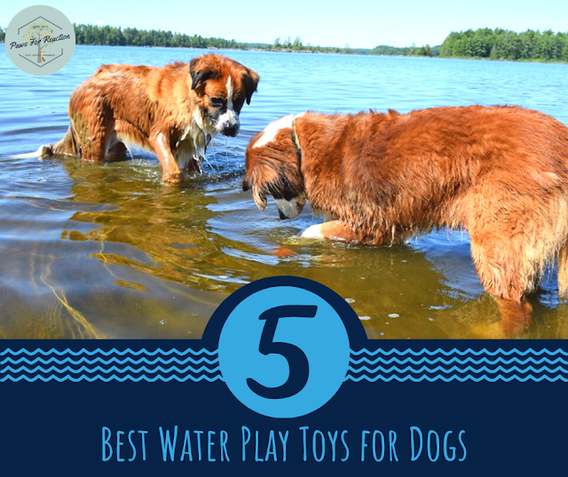 Top Five Friday: Five best water play toys for dogs #FridayFive