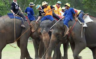 Elefanten Polo Hua Hin