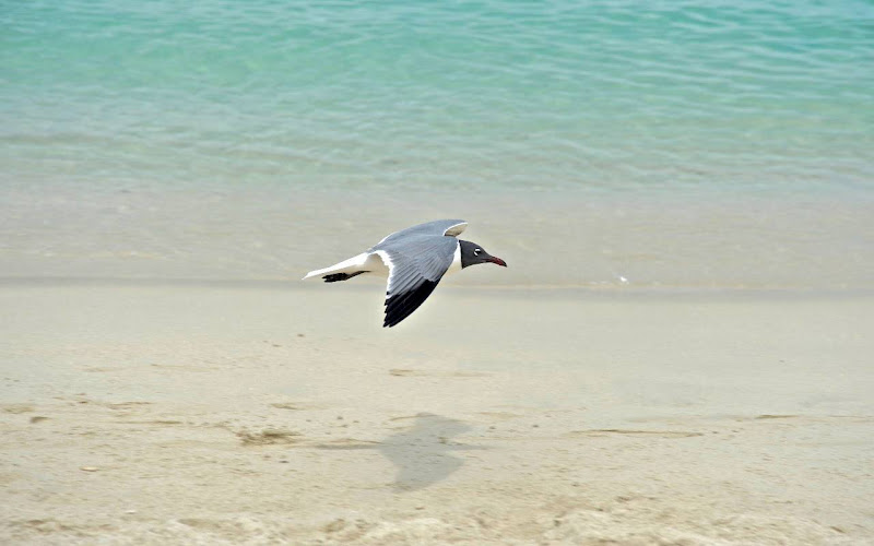 Beautiful Seagull Widescreen HD Wallpaper 2
