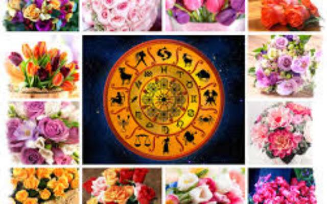 Знаки Зодиака и их растения! Каждому из нас, свойственно своё комнатное растение…