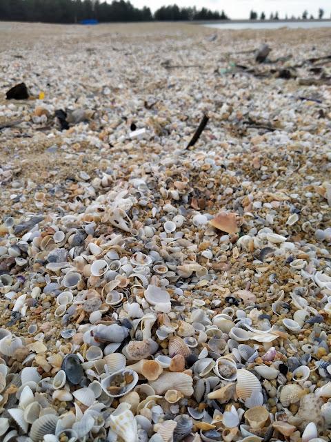 gambar seashell kerangan laut di atas pasir