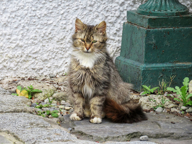 Cute cat at Ghan House Hotel in Carlingford Town Ireland