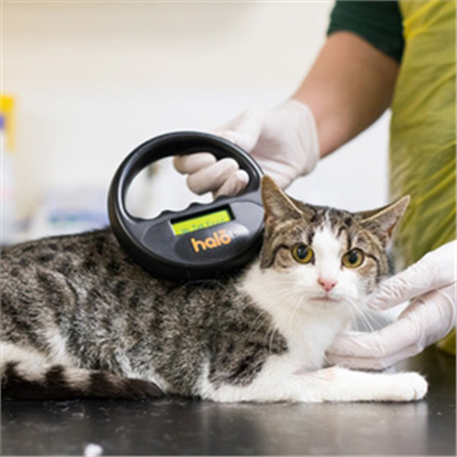 tabby and white cat being scanned for microchip