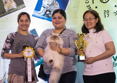 Cat show winners with trophy and yellow award ribbon