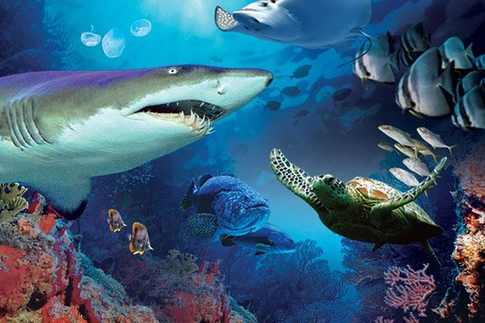 Aquaria KLLC has shark, turtles and many kind of fishes